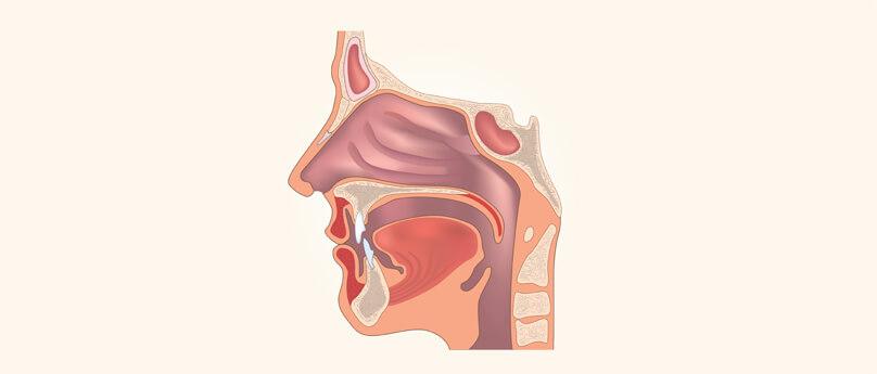 Nos Anatomia Funkcje Budowa Nosa I Porady Zdrowotne Xylogel